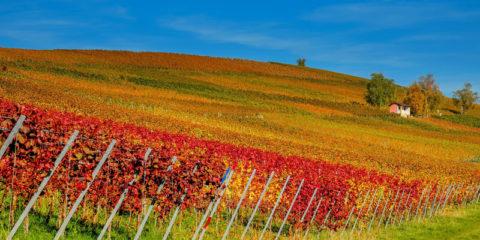 Un autunno…CALDO!